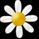 Иконка ромашка - цветы, ромашка
