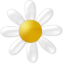 Иконка ромашка