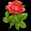 Иконка цветок