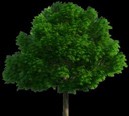 Дерево без фона