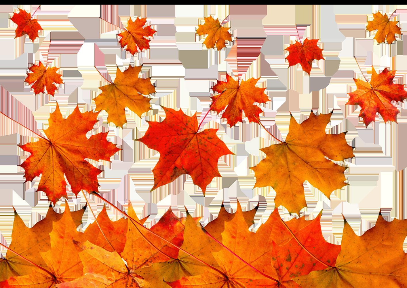 Осенние кленовые листья - осень, листья, клён