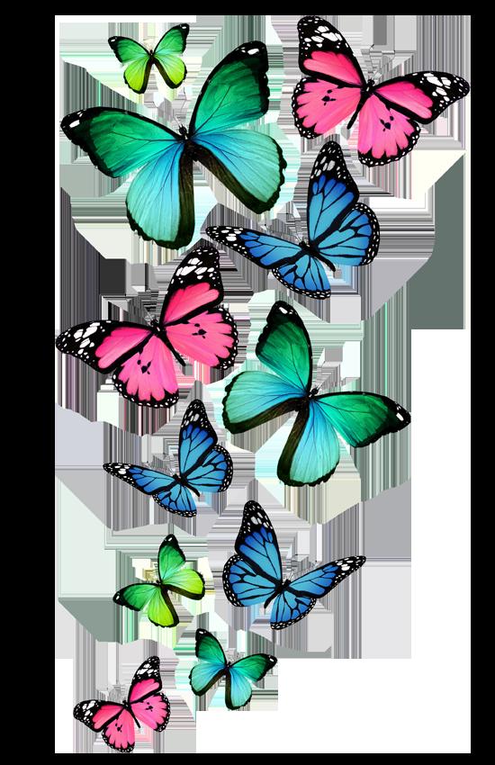 Бабочки на прозрачном фоне - насекомые, бабочки