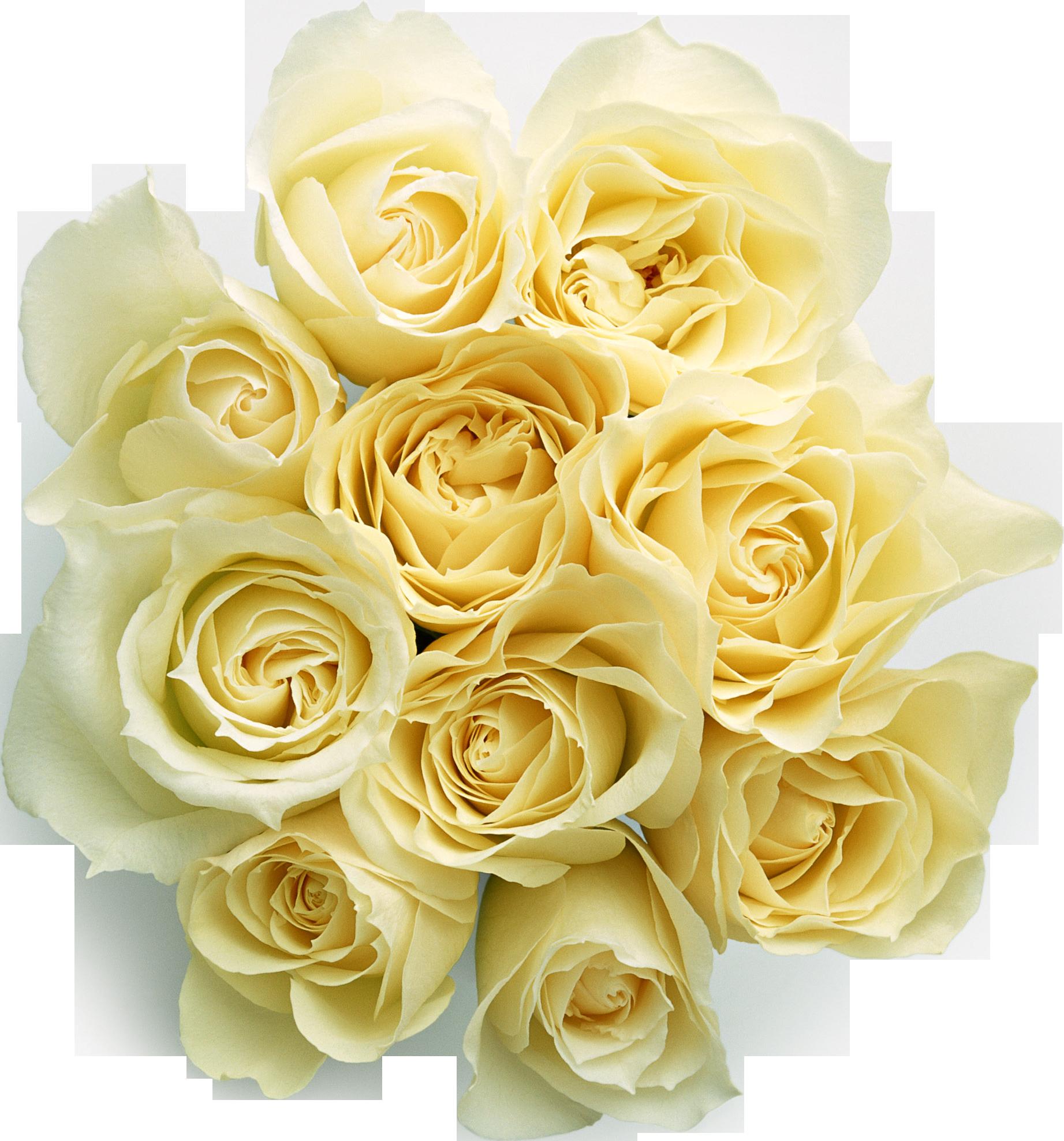Белые розы - цветы, розы, букет