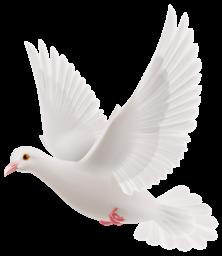 Белый голубь на прозрачном фоне - птицы, животные, голуби