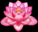 Картинка цветок лотоса