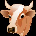 Корова - корова, животные, домашние животные, голова