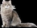 Кошка на прозрачном фоне