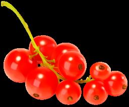 Красная смородина - ягоды, смородина
