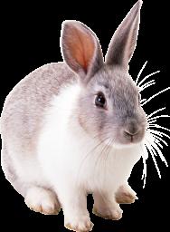 Кролик - кролик, заяц, животные, домашние животные