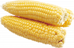 Кукуруза - початки, овощи, кукуруза, еда