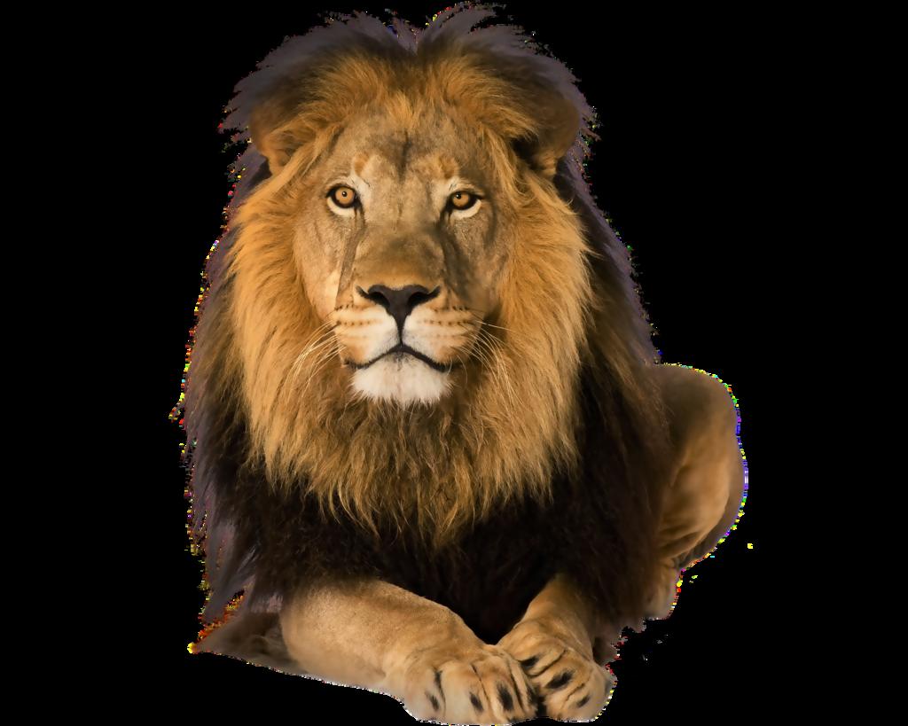 Лев - лев, животные