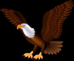 Орел - птицы, орёл, животные