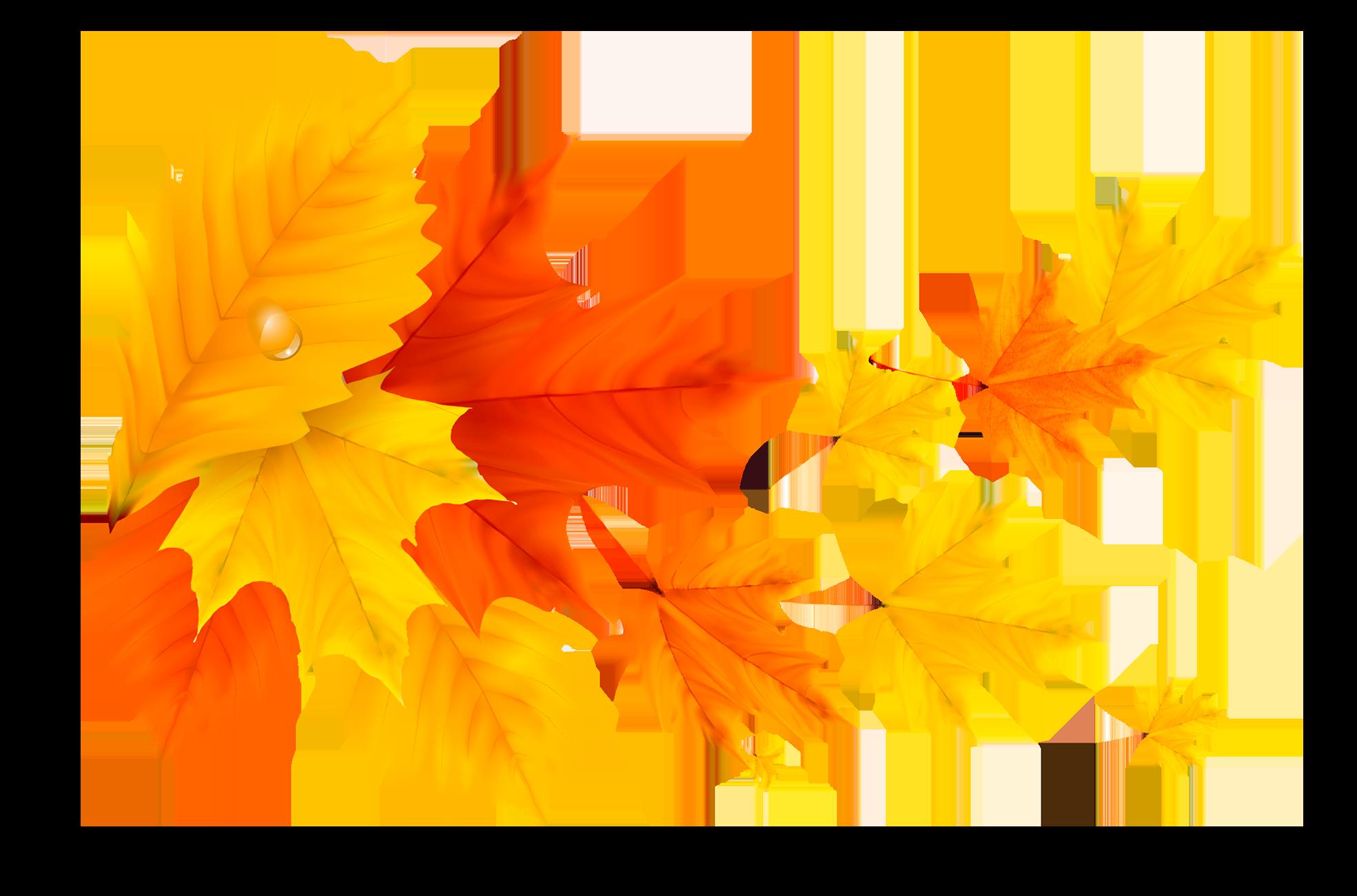 Осенние листья на прозрачном фоне - осень, листья