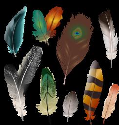 Перья птиц - птицы, перья