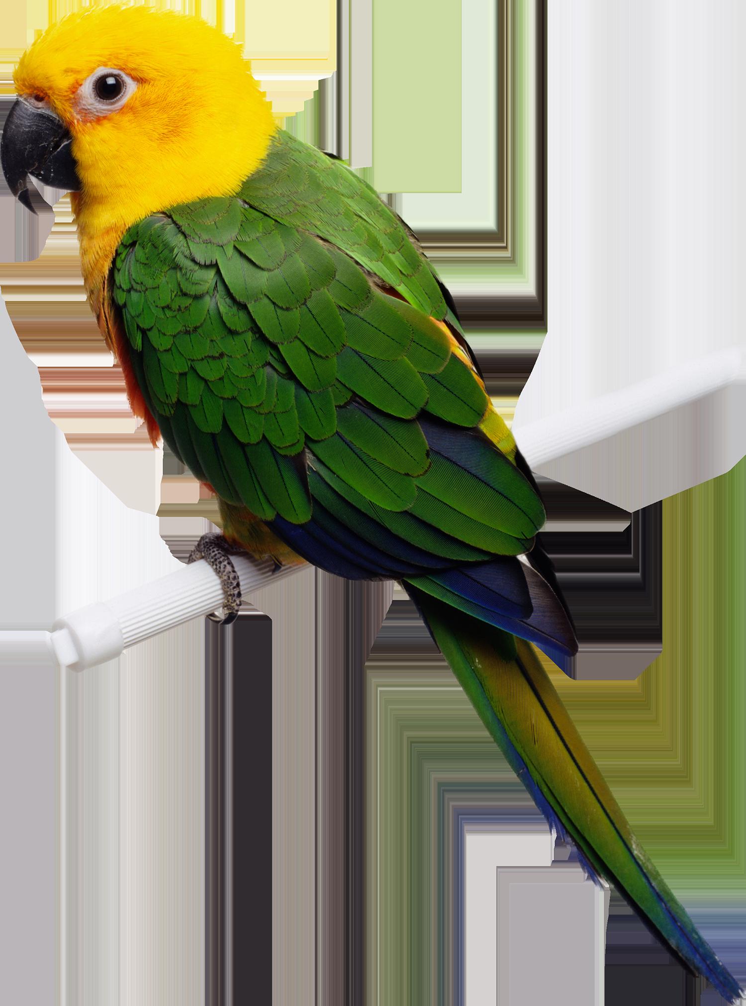 Попугай - птицы, попугай, животные