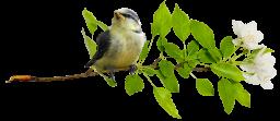 Птица на ветке - птицы, природа, ветка