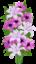 Пурпурный букет