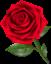 Роза png