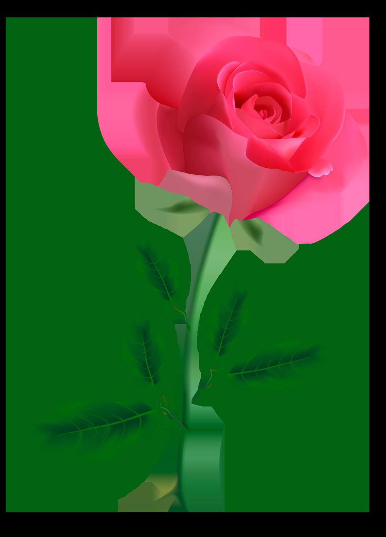 Роза картинка на белом фоне для детей