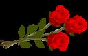 Розы на прозрачном фоне