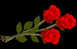 Розы на прозрачном фоне - цветы, роза, букет