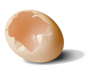 Скорлупа