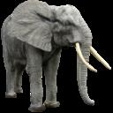 Иконка слон - слон