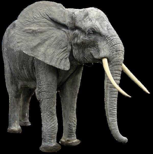 Слон - слон