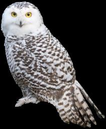 Сова на прозрачном фоне - сова, птицы, животные