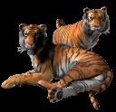 Картинка тигры на...