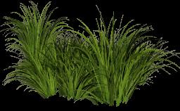 Трава - трава, растения, природа, кусты