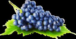 Гроздь винограда - ягоды, виноград
