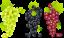 Виноградные грозди
