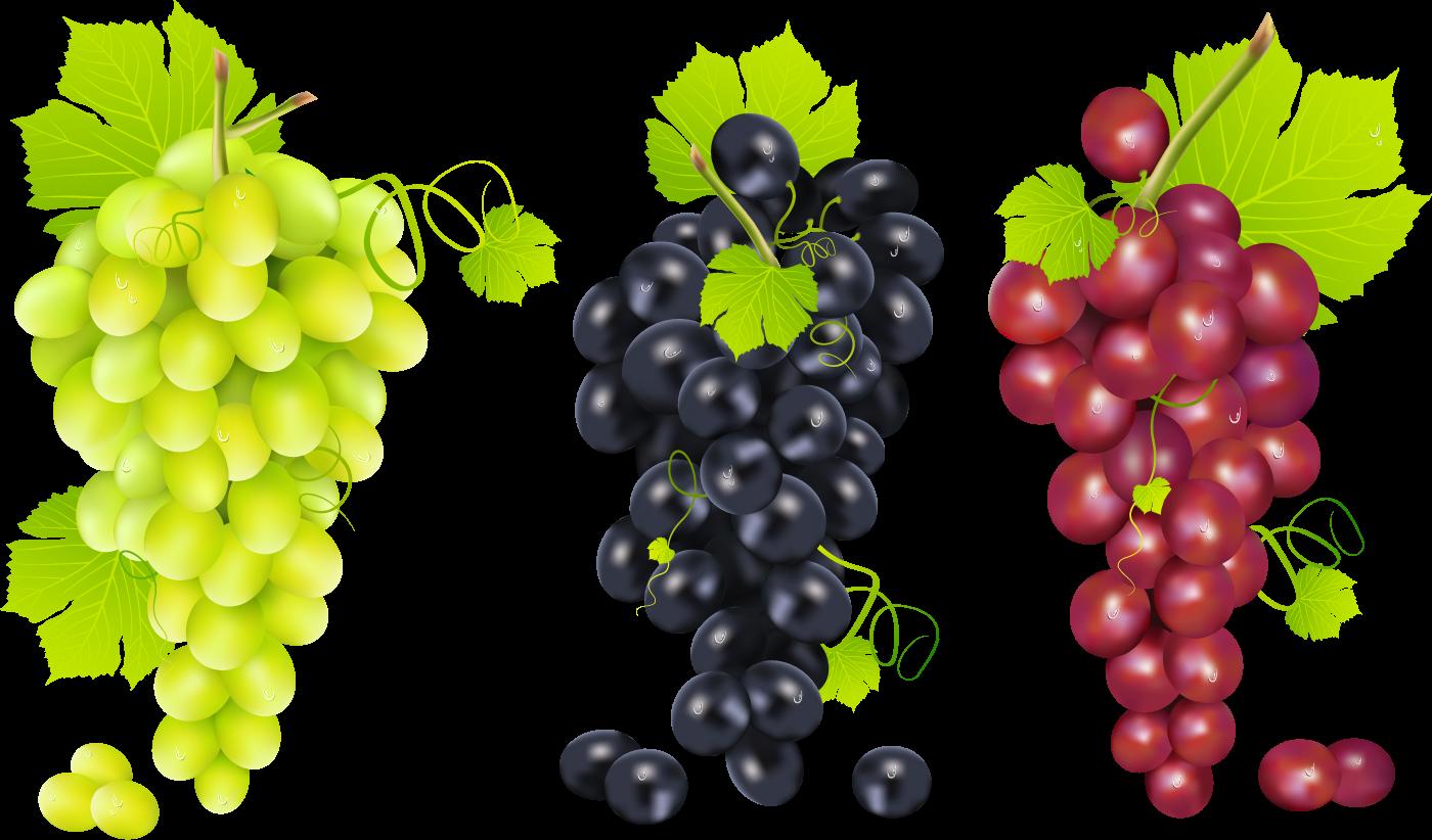 Виноградные грозди - ягоды, растения, еда, виноград