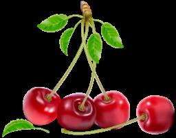 Вишня - ягоды, вишня