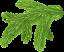 Еловая ветка