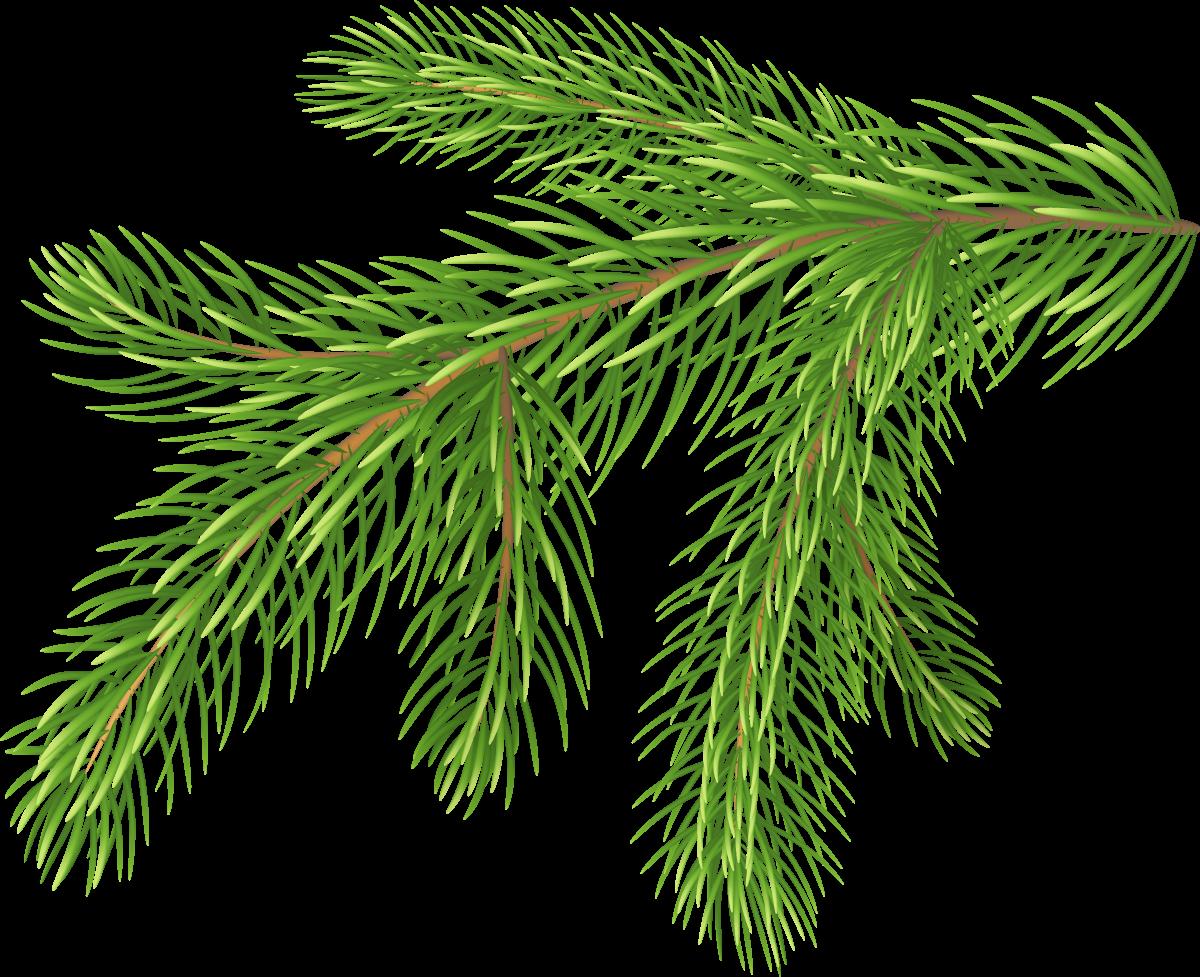 Еловая ветка - рождество, растения, новый год, ель