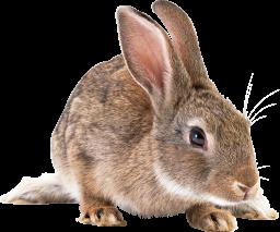Заяц - кролик, заяц, животные
