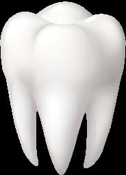 Зуб - стоматология, зуб
